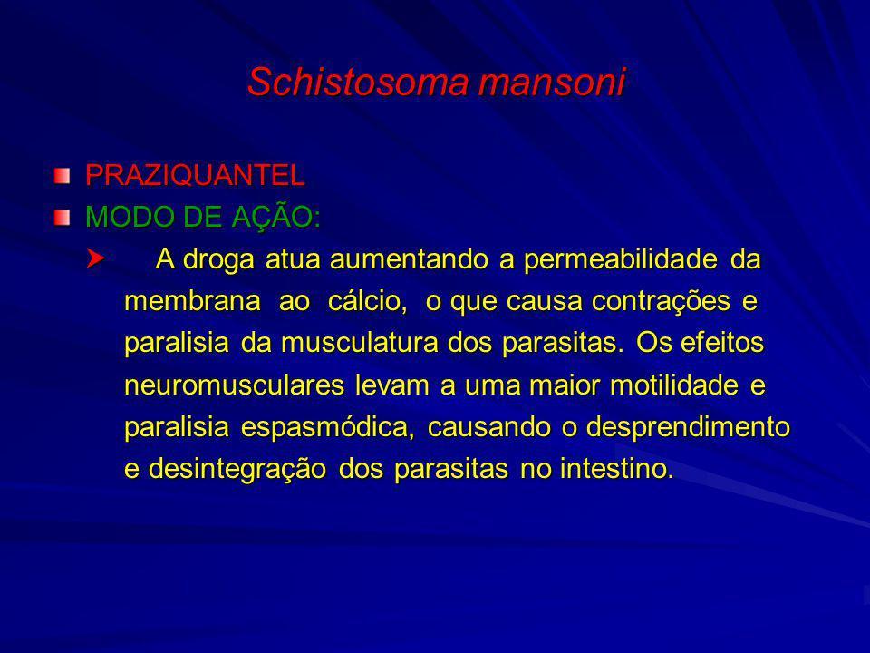 Schistosoma mansoni PRAZIQUANTEL MODO DE AÇÃO: A droga atua aumentando a permeabilidade da A droga atua aumentando a permeabilidade da membrana ao cál
