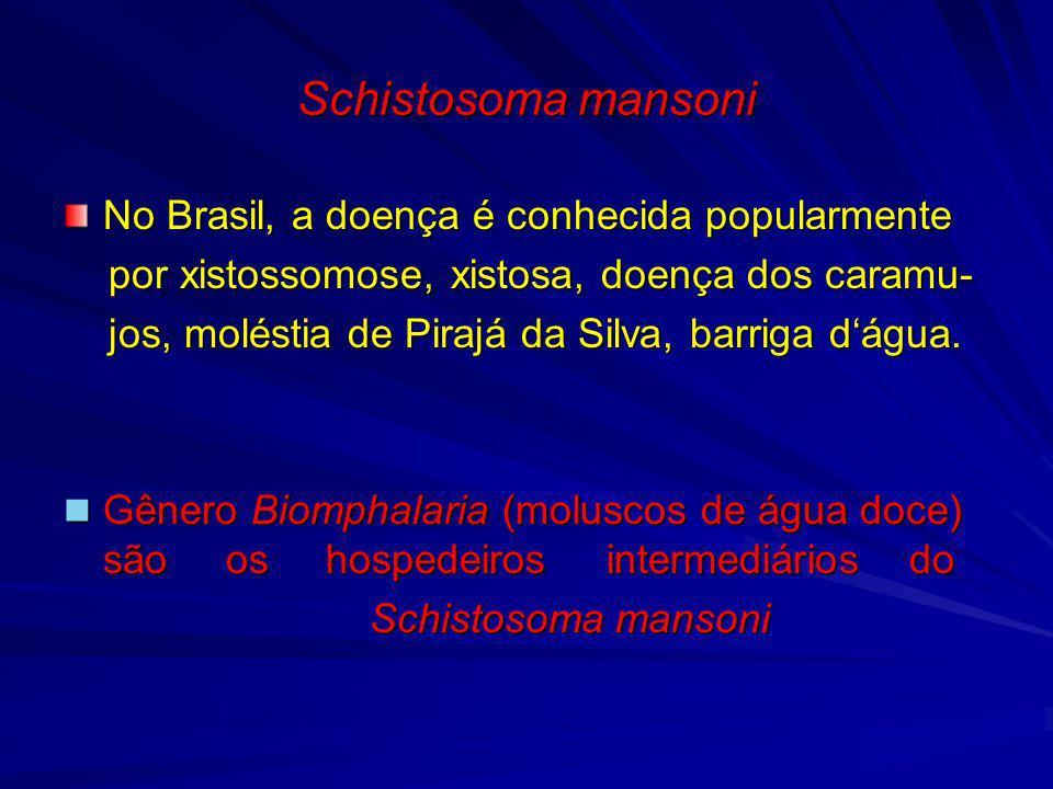 Schistosoma mansoni PROFILAXIA No contexto geral: No contexto geral: Saneamento básico Saneamento básico Educação sanitária Educação sanitária Tratamento dos doentes Tratamento dos doentes Combate ao molusco presentes nos focos Combate ao molusco presentes nos focos peridomiciliares através de moluscocidas.