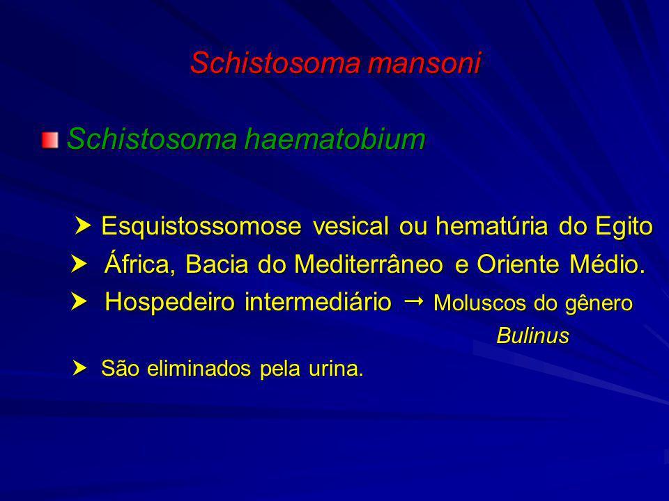 Schistosoma mansoni Schistosoma japonicum Esquistossomose intestinal (moléstia de Katayama) China, Japão, Ilhas Filipinas e sudeste asiático Hospedeiro intermediário Moluscos do gênero Oncomelania.