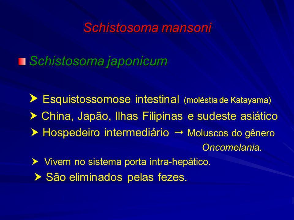 Schistosoma mansoni MORFOLOGIA Macho Mede 1 cm, cor esbranquiçada, corpo dividido em 2 Macho Mede 1 cm, cor esbranquiçada, corpo dividido em 2 porções: Anterior ventosa oral e ventral porções: Anterior ventosa oral e ventral Posterior canal ginecôforo Posterior canal ginecôforo Fênea Mede 1,5 cm, cor mais escura, corpo dividido em 2 Fênea Mede 1,5 cm, cor mais escura, corpo dividido em 2 porções: Anterior ventosa oral e ventral porções: Anterior ventosa oral e ventral Posterior glândulas vitelinas e ceco Posterior glândulas vitelinas e ceco Ovo Mede 150 μm, oval e apresenta lateralmente um espículo Ovo Mede 150 μm, oval e apresenta lateralmente um espículo voltado para trás (longevidade do ovo maduro:3 a 4 semanas).