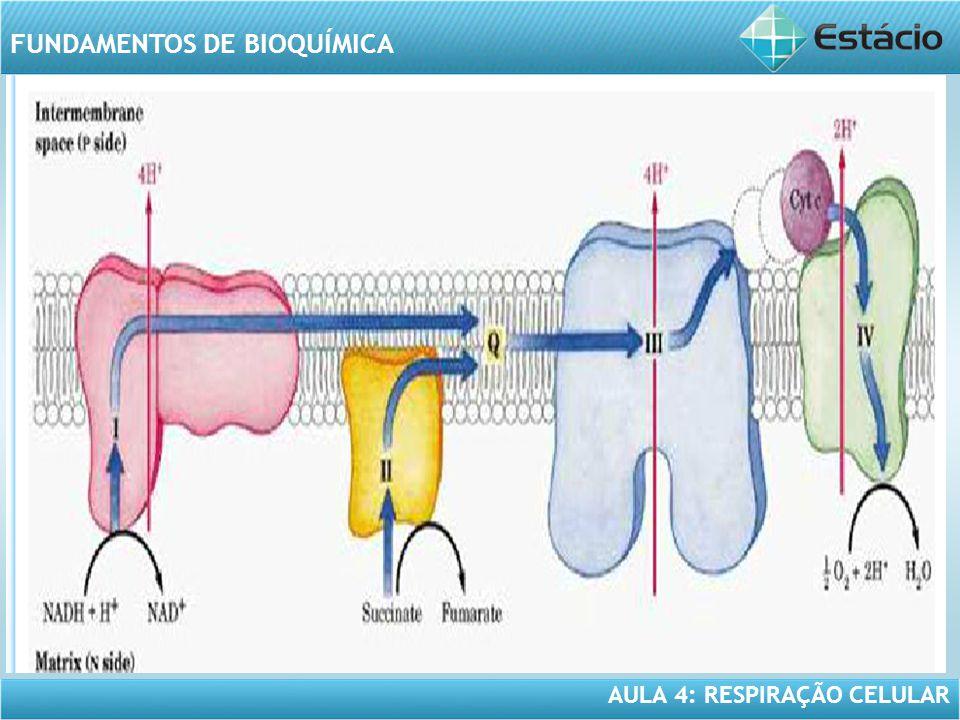 AULA 4: RESPIRAÇÃO CELULAR FUNDAMENTOS DE BIOQUÍMICA