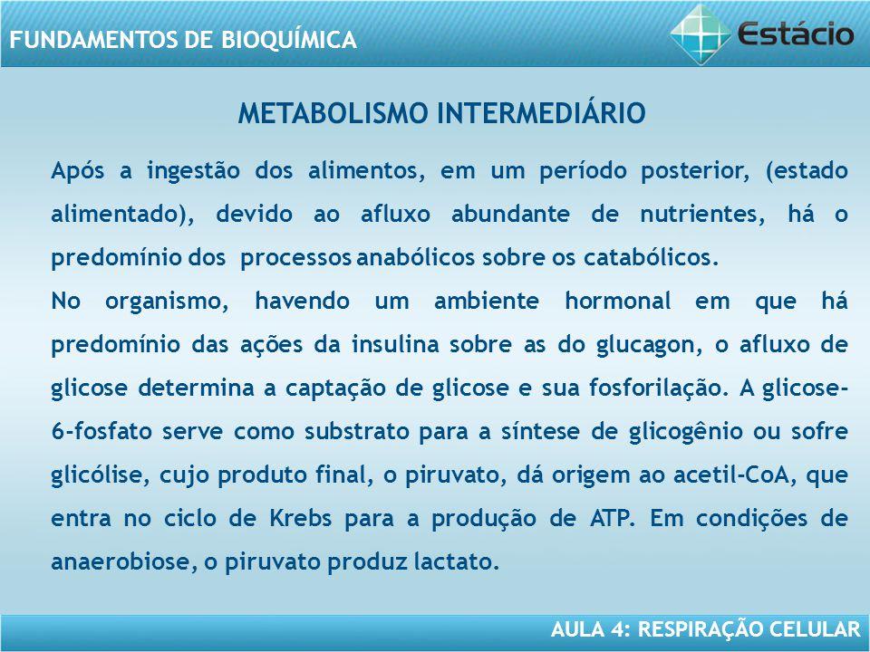 AULA 4: RESPIRAÇÃO CELULAR FUNDAMENTOS DE BIOQUÍMICA Após a ingestão dos alimentos, em um período posterior, (estado alimentado), devido ao afluxo abu