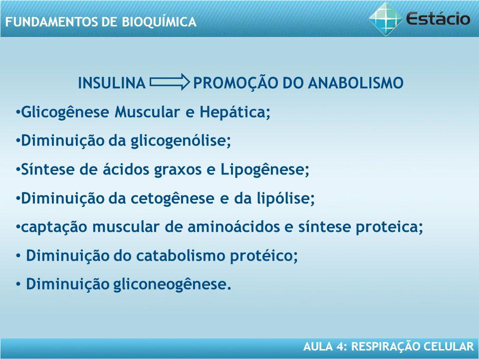 AULA 4: RESPIRAÇÃO CELULAR FUNDAMENTOS DE BIOQUÍMICA INSULINA PROMOÇÃO DO ANABOLISMO Glicogênese Muscular e Hepática; Diminuição da glicogenólise; Sín