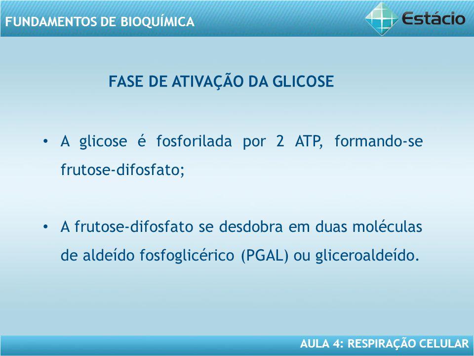 AULA 4: RESPIRAÇÃO CELULAR FUNDAMENTOS DE BIOQUÍMICA FASE DE ATIVAÇÃO DA GLICOSE A glicose é fosforilada por 2 ATP, formando-se frutose-difosfato; A f