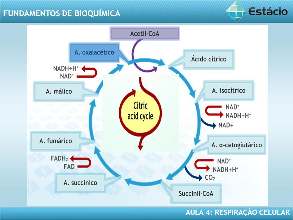 AULA 4: RESPIRAÇÃO CELULAR FUNDAMENTOS DE BIOQUÍMICA FERMENTAÇÃO ALCOÓLICA x FERMENTAÇÃO LÁCTICA Produtos finais: diferem em função das reações que ocorrem a partir do ácido pirúvico.