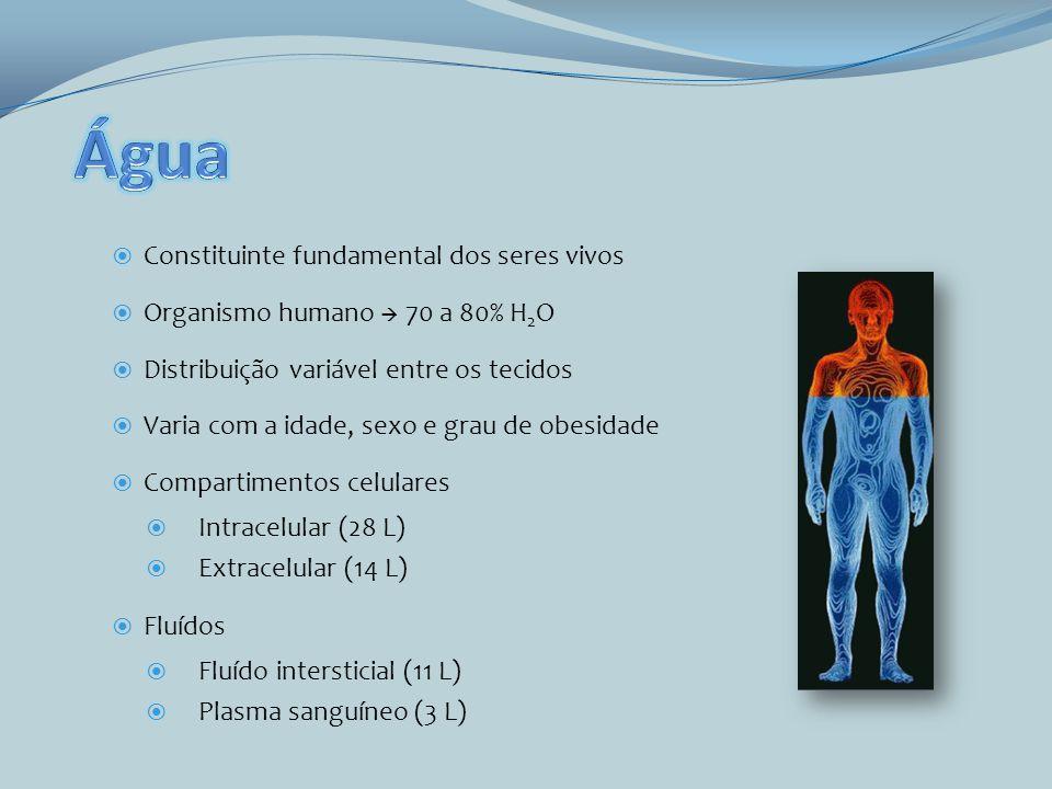 Constituinte fundamental dos seres vivos Organismo humano 70 a 80% H 2 O Distribuição variável entre os tecidos Varia com a idade, sexo e grau de obes