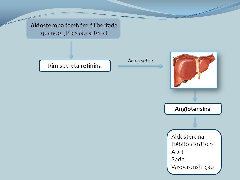 Aldosterona também é libertada quando Pressão arterial Rim secreta retinina Actua sobre Angiotensina Aldosterona Débito cardíaco ADH Sede Vasocronstri