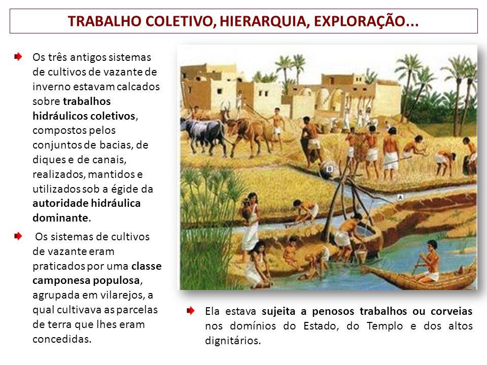 TRABALHO COLETIVO, HIERARQUIA, EXPLORAÇÃO...