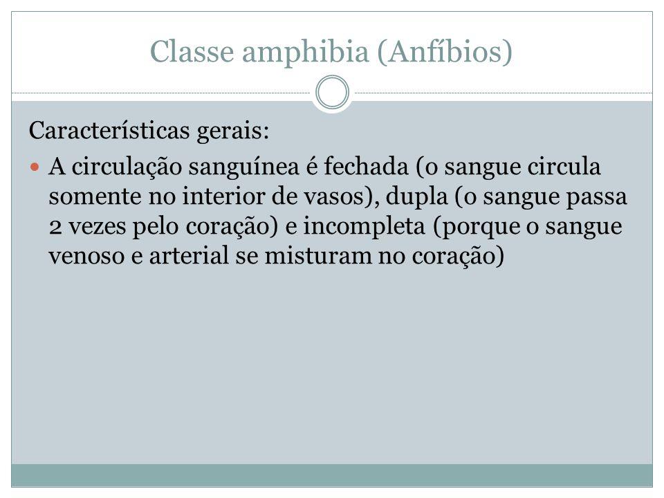Classe amphibia (Anfíbios) Características gerais: A circulação sanguínea é fechada (o sangue circula somente no interior de vasos), dupla (o sangue p