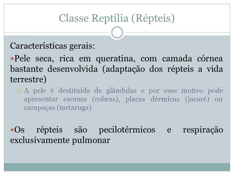 Classe Reptilia (Répteis) Características gerais: Pele seca, rica em queratina, com camada córnea bastante desenvolvida (adaptação dos répteis a vida