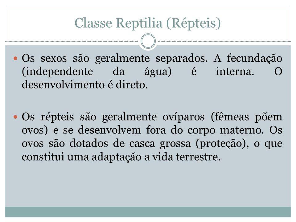 Classe Reptilia (Répteis) Os sexos são geralmente separados. A fecundação (independente da água) é interna. O desenvolvimento é direto. Os répteis são