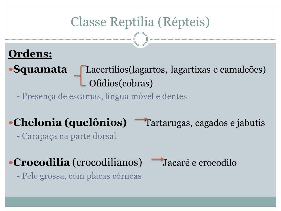 Classe Reptilia (Répteis) Ordens: Squamata Lacertilios(lagartos, lagartixas e camaleões) Ofídios(cobras) - Presença de escamas, língua móvel e dentes