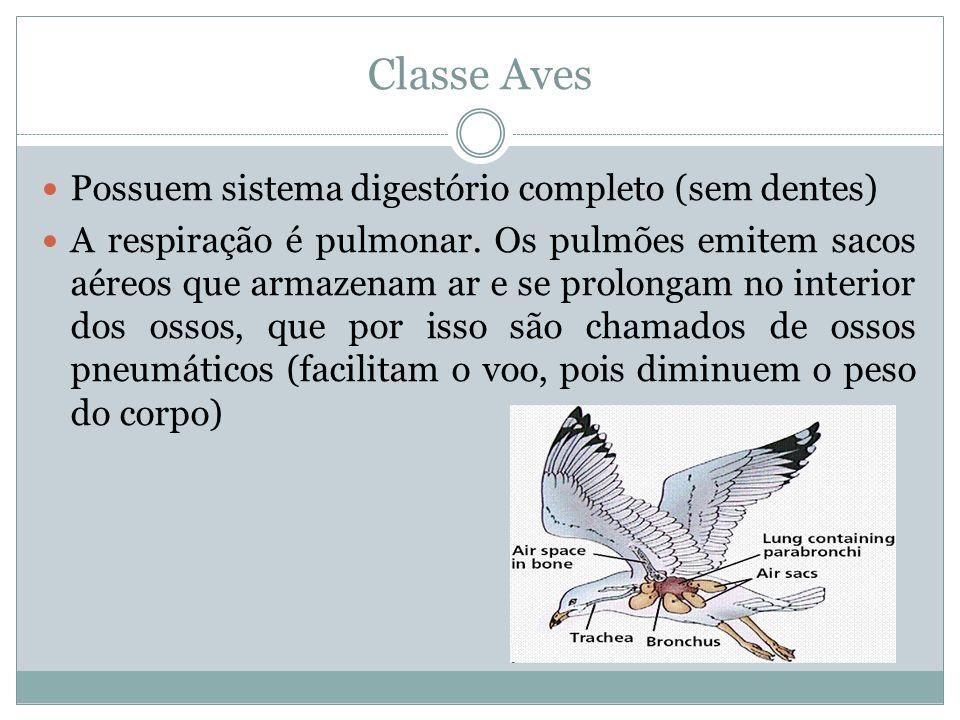 Classe Aves Possuem sistema digestório completo (sem dentes) A respiração é pulmonar. Os pulmões emitem sacos aéreos que armazenam ar e se prolongam n