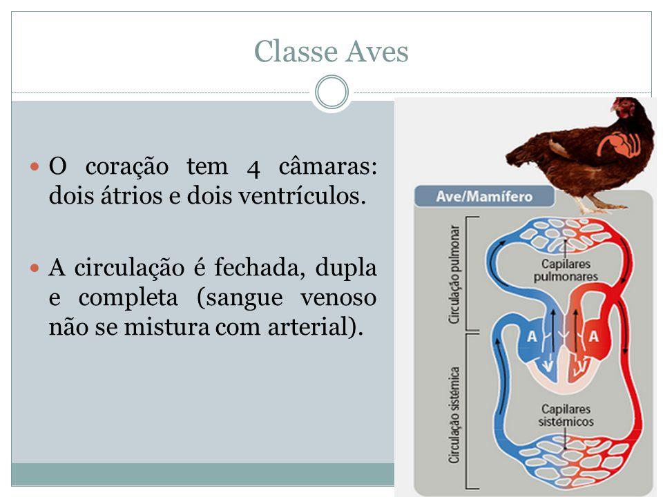 Classe Aves O coração tem 4 câmaras: dois átrios e dois ventrículos. A circulação é fechada, dupla e completa (sangue venoso não se mistura com arteri