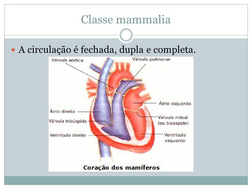 Classe mammalia A circulação é fechada, dupla e completa.