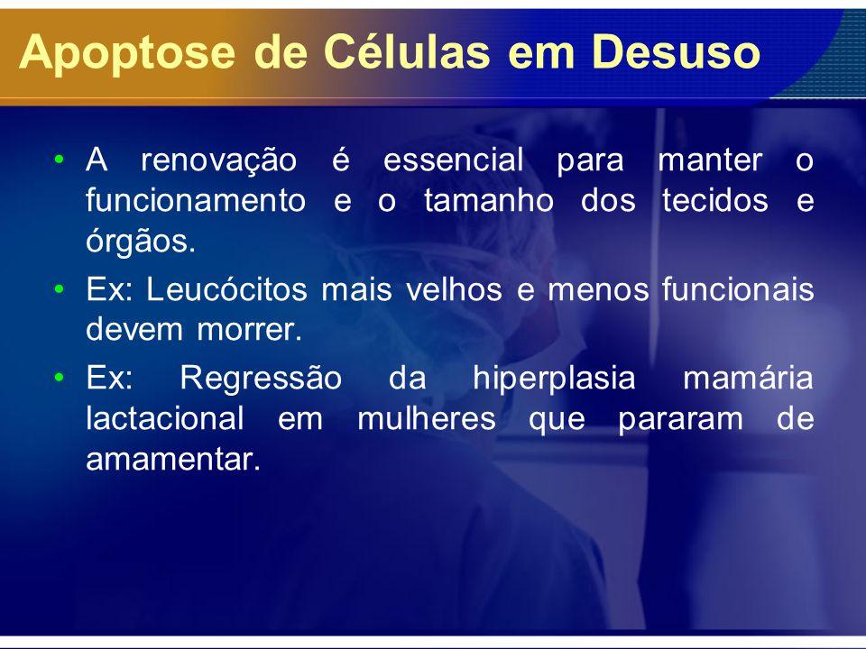 Apoptose de Células em Desuso A renovação é essencial para manter o funcionamento e o tamanho dos tecidos e órgãos. Ex: Leucócitos mais velhos e menos