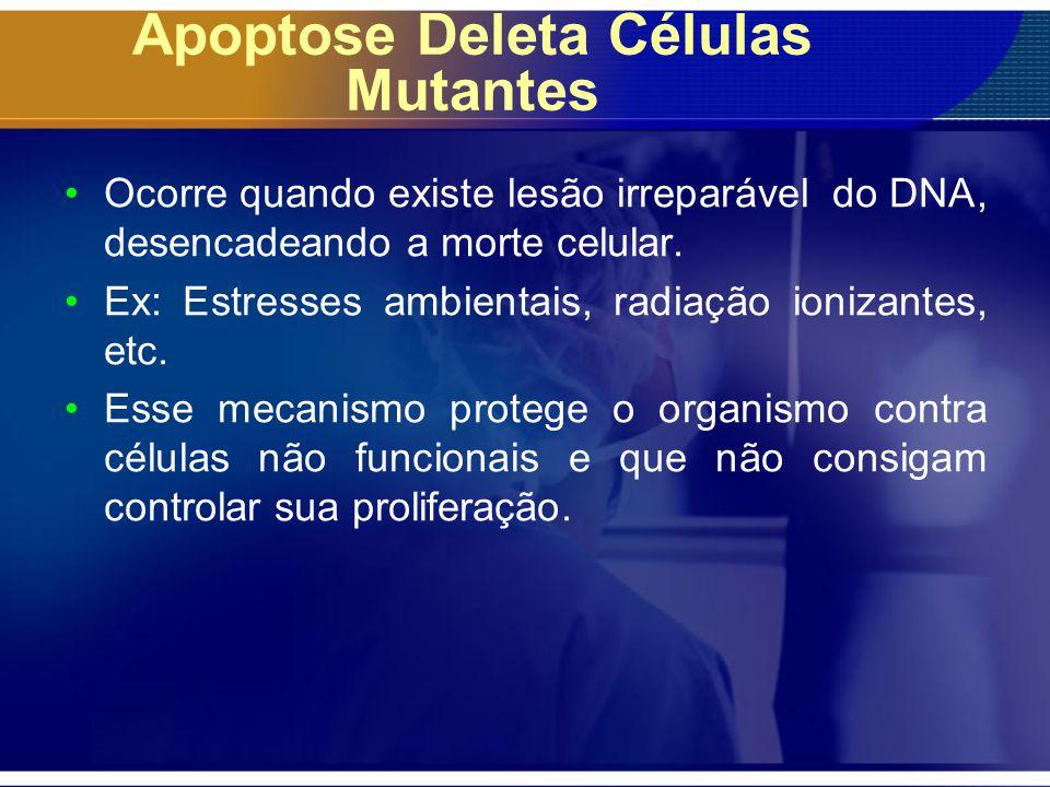 Apoptose Deleta Células Mutantes Ocorre quando existe lesão irreparável do DNA, desencadeando a morte celular. Ex: Estresses ambientais, radiação ioni