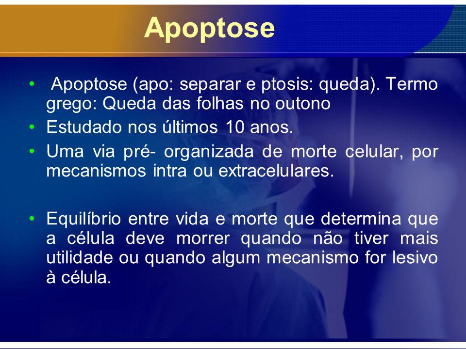 Apoptose Apoptose (apo: separar e ptosis: queda). Termo grego: Queda das folhas no outono Estudado nos últimos 10 anos. Uma via pré- organizada de mor