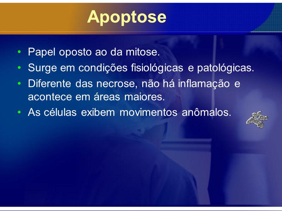 Apoptose Papel oposto ao da mitose. Surge em condições fisiológicas e patológicas. Diferente das necrose, não há inflamação e acontece em áreas maiore
