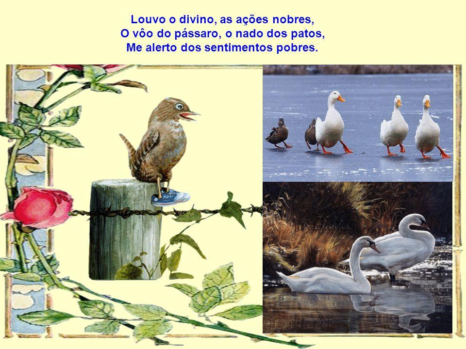 Louvo o divino, as ações nobres, O vôo do pássaro, o nado dos patos, Me alerto dos sentimentos pobres.