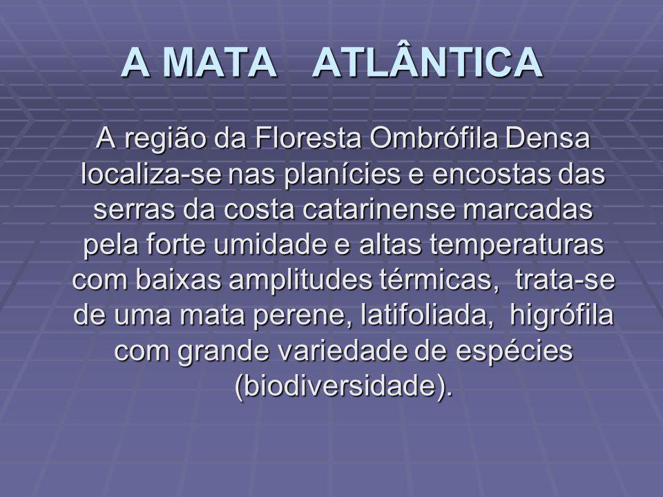 4. Vegetação OBS.: 1.A formação Pioneira tem no Mangue o destaque ( Pará até SC ); 2.A Flor-Símbolo: Laelia Purpurata ( Mata Atlântica ); 3.A Árvore S
