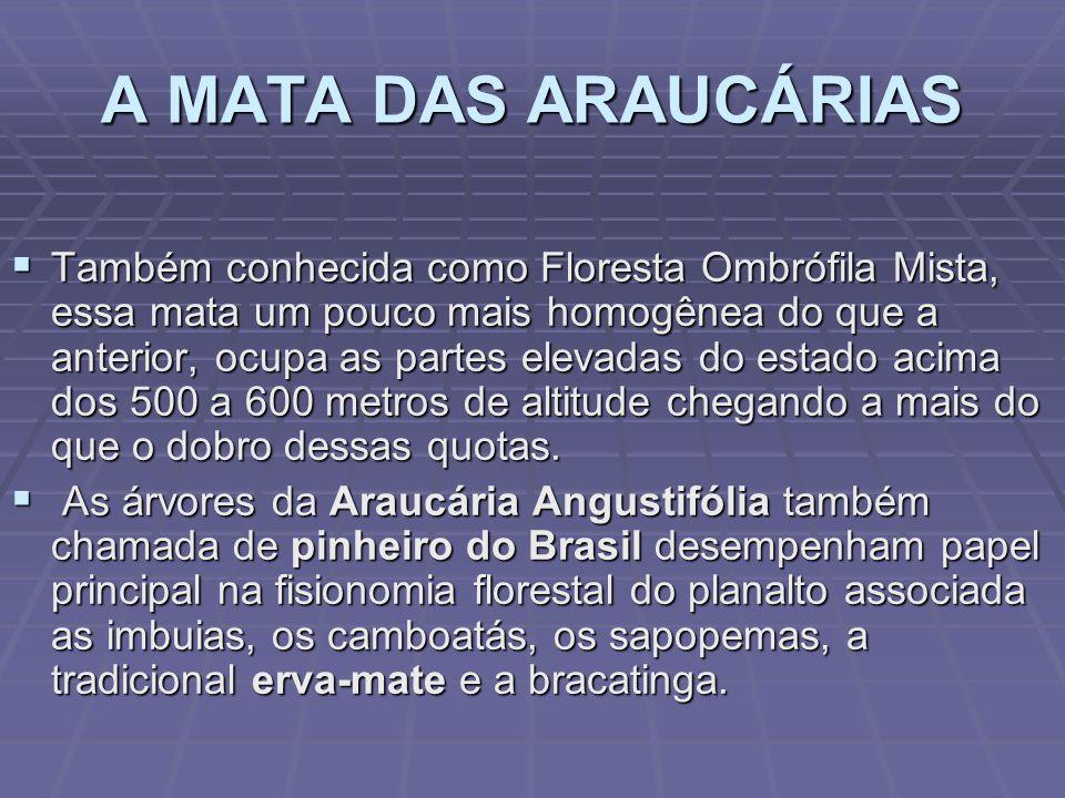 A MATA ATLÂNTICA A região da Floresta Ombrófila Densa localiza-se nas planícies e encostas das serras da costa catarinense marcadas pela forte umidade