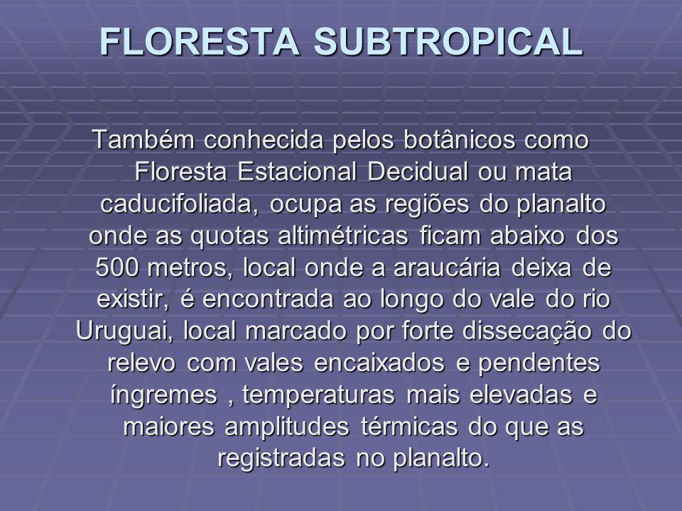 A MATA DAS ARAUCÁRIAS Também conhecida como Floresta Ombrófila Mista, essa mata um pouco mais homogênea do que a anterior, ocupa as partes elevadas do estado acima dos 500 a 600 metros de altitude chegando a mais do que o dobro dessas quotas.