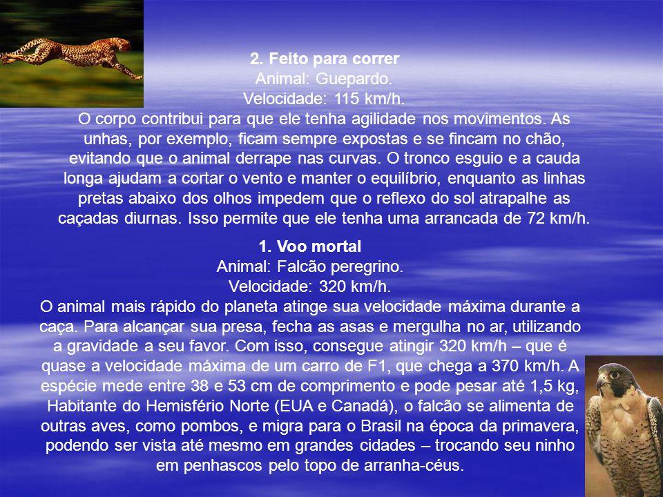 2. Feito para correr Animal: Guepardo. Velocidade: 115 km/h. O corpo contribui para que ele tenha agilidade nos movimentos. As unhas, por exemplo, fic