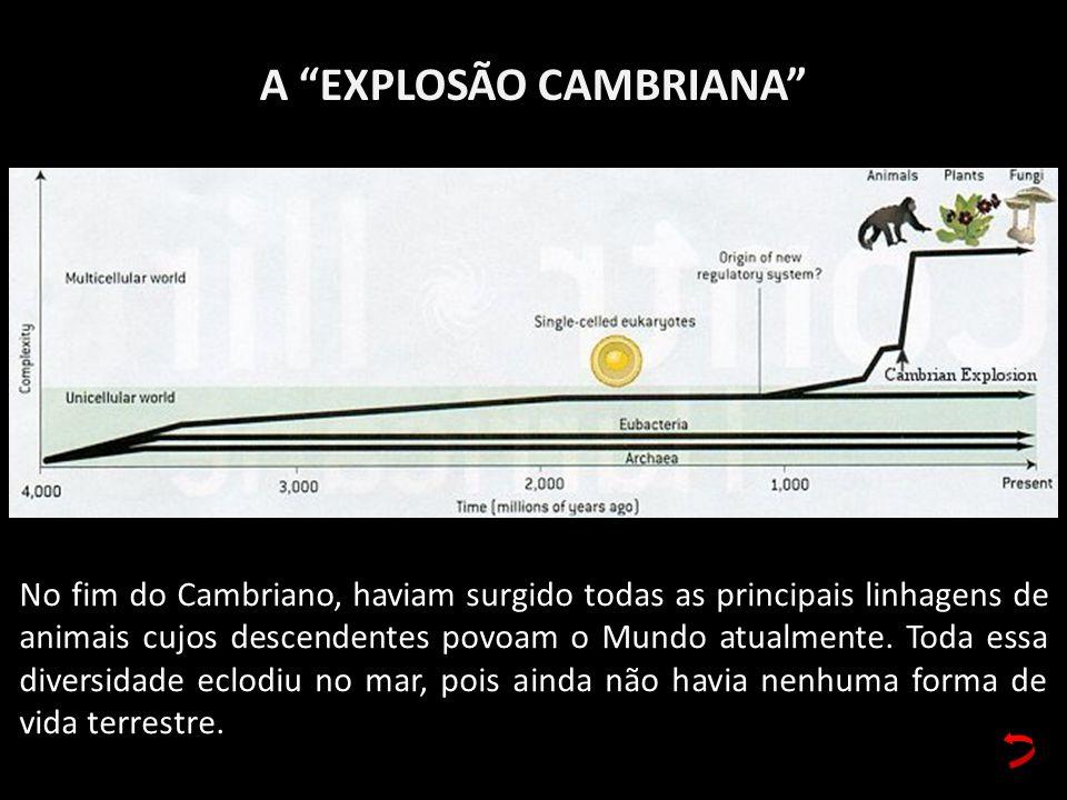 A EXPLOSÃO CAMBRIANA No fim do Cambriano, haviam surgido todas as principais linhagens de animais cujos descendentes povoam o Mundo atualmente. Toda e