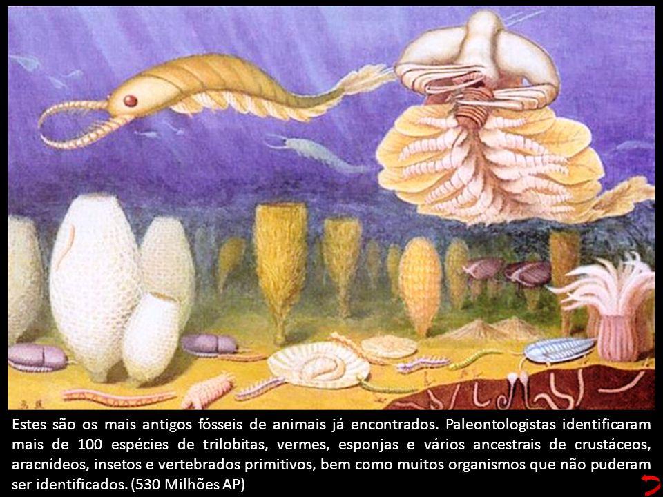 Estes são os mais antigos fósseis de animais já encontrados. Paleontologistas identificaram mais de 100 espécies de trilobitas, vermes, esponjas e vár