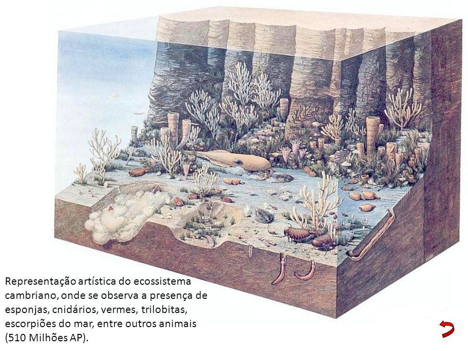 Representação artística do ecossistema cambriano, onde se observa a presença de esponjas, cnidários, vermes, trilobitas, escorpiões do mar, entre outr
