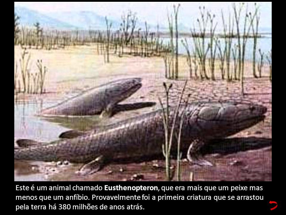 Este é um animal chamado Eusthenopteron, que era mais que um peixe mas menos que um anfíbio. Provavelmente foi a primeira criatura que se arrastou pel