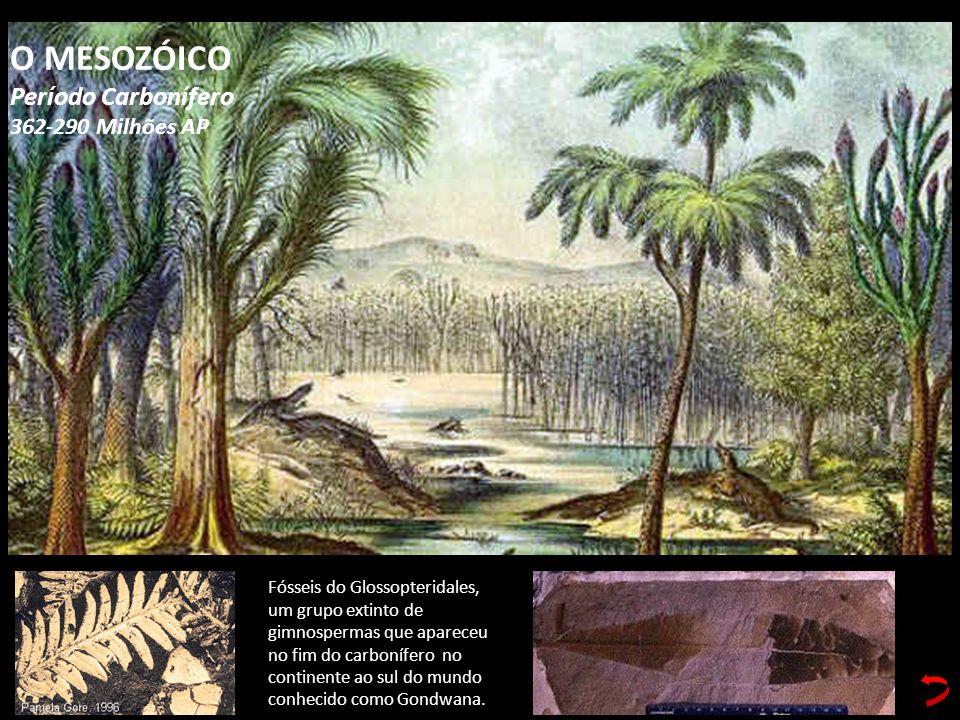 Fósseis do Glossopteridales, um grupo extinto de gimnospermas que apareceu no fim do carbonífero no continente ao sul do mundo conhecido como Gondwana