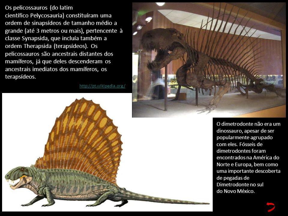 Os pelicossauros (do latim científico Pelycosauria) constituíram uma ordem de sinapsídeos de tamanho médio a grande (até 3 metros ou mais), pertencent