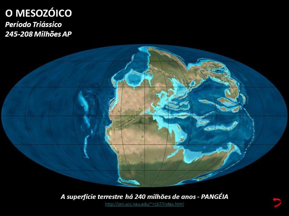 A superfície terrestre há 240 milhões de anos - PANGÉIA http://jan.ucc.nau.edu/~rcb7/index.html O MESOZÓICO Período Triássico 245-208 Milhões AP