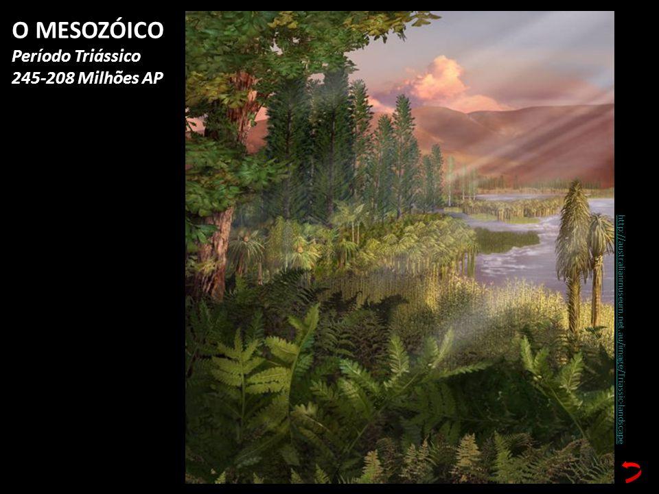 http://australianmuseum.net.au/image/Triassic-landscape O MESOZÓICO Período Triássico 245-208 Milhões AP