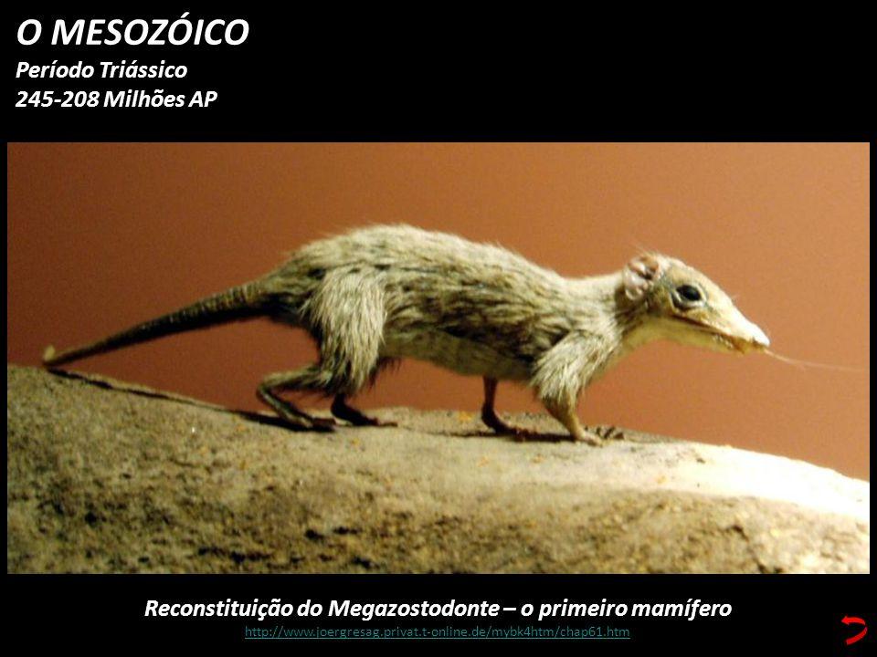 O MESOZÓICO Período Triássico 245-208 Milhões AP Reconstituição do Megazostodonte – o primeiro mamífero http://www.joergresag.privat.t-online.de/mybk4