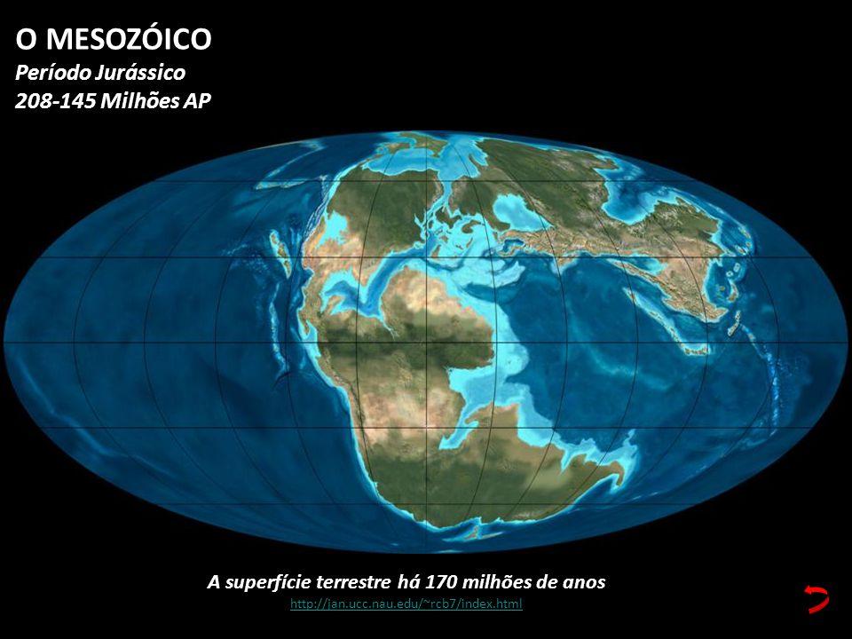 A superfície terrestre há 170 milhões de anos http://jan.ucc.nau.edu/~rcb7/index.html O MESOZÓICO Período Jurássico 208-145 Milhões AP