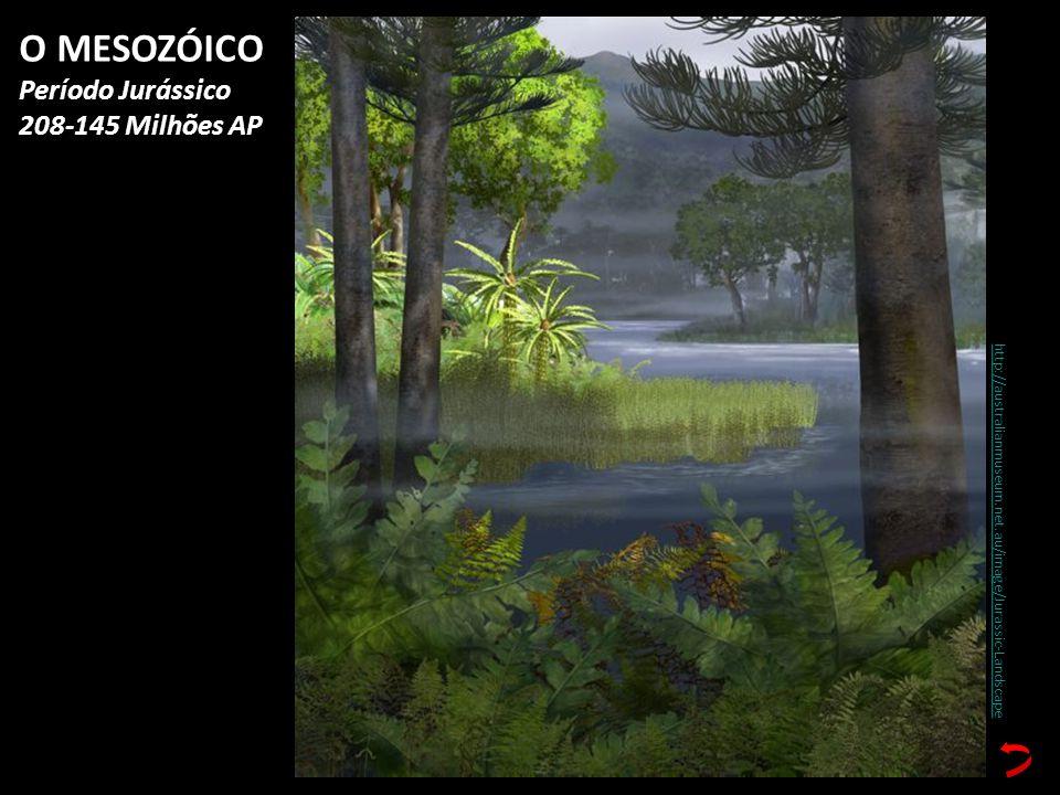 http://australianmuseum.net.au/image/Jurassic-Landscape O MESOZÓICO Período Jurássico 208-145 Milhões AP