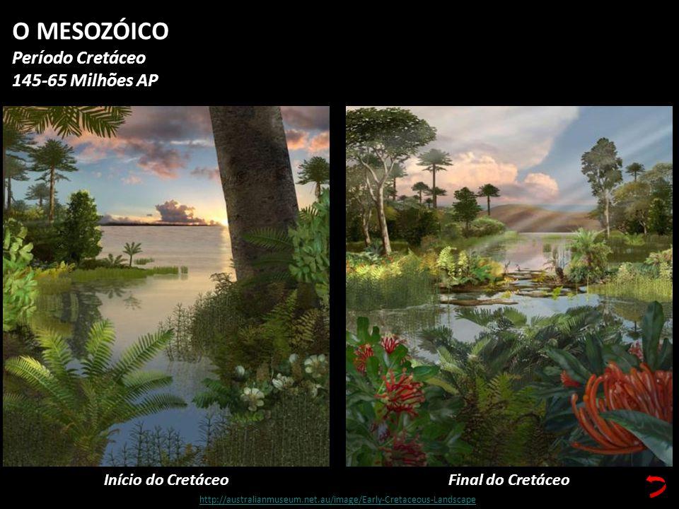 Início do Cretáceo O MESOZÓICO Período Cretáceo 145-65 Milhões AP Final do Cretáceo http://australianmuseum.net.au/image/Early-Cretaceous-Landscape