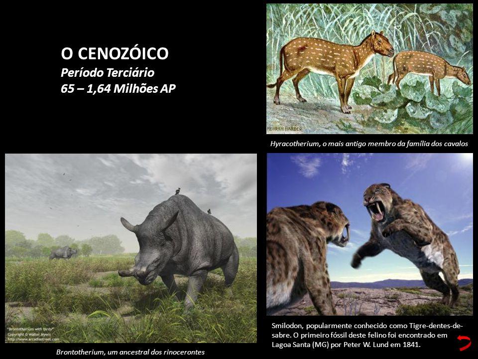 Smilodon, popularmente conhecido como Tigre-dentes-de- sabre. O primeiro fóssil deste felino foi encontrado em Lagoa Santa (MG) por Peter W. Lund em 1