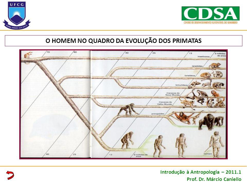 O HOMEM NO QUADRO DA EVOLUÇÃO DOS PRIMATAS Introdução à Antropologia – 2011.1 Prof. Dr. Márcio Caniello