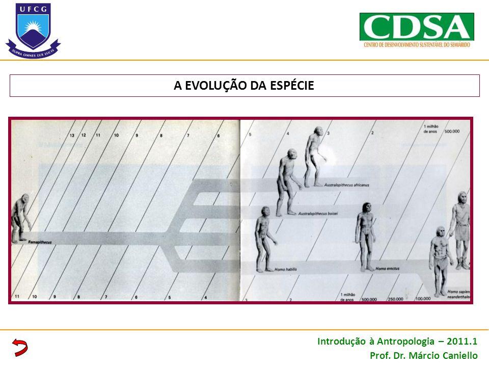 A EVOLUÇÃO DA ESPÉCIE Introdução à Antropologia – 2011.1 Prof. Dr. Márcio Caniello