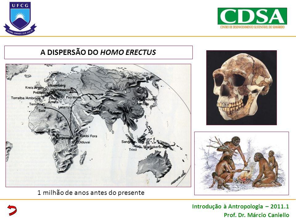 A DISPERSÃO DO HOMO ERECTUS 1 milhão de anos antes do presente Introdução à Antropologia – 2011.1 Prof. Dr. Márcio Caniello