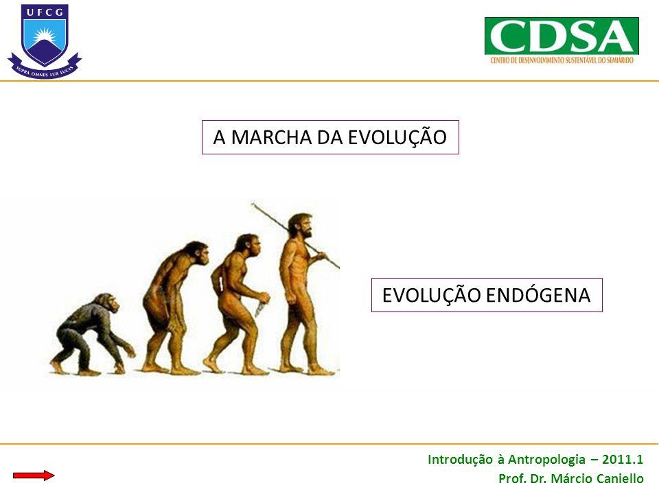 EVOLUÇÃO ENDÓGENA A MARCHA DA EVOLUÇÃO Introdução à Antropologia – 2011.1 Prof. Dr. Márcio Caniello