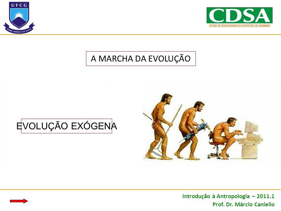 A MARCHA DA EVOLUÇÃO EVOLUÇÃO EXÓGENA Introdução à Antropologia – 2011.1 Prof. Dr. Márcio Caniello