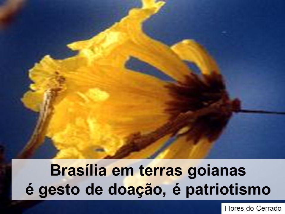 Flores do Cerrado Brasília em terras goianas é gesto de doação, é patriotismo
