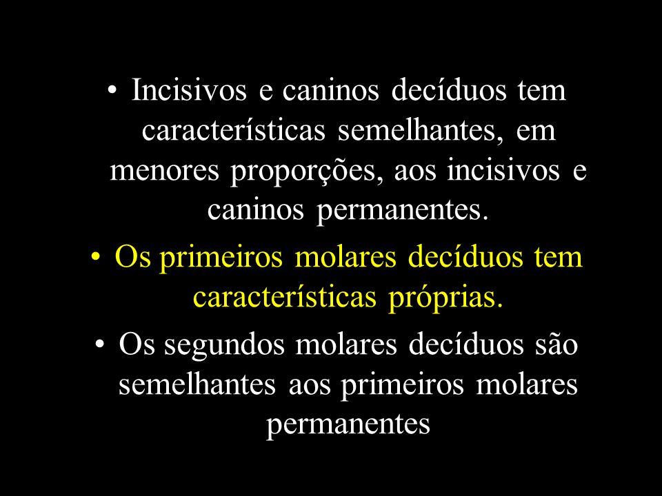 Incisivos e caninos decíduos tem características semelhantes, em menores proporções, aos incisivos e caninos permanentes. Os primeiros molares decíduo