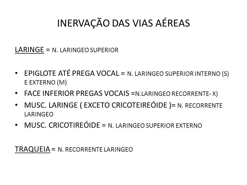 INERVAÇÃO DAS VIAS AÉREAS LARINGE = N. LARINGEO SUPERIOR EPIGLOTE ATÉ PREGA VOCAL = N. LARINGEO SUPERIOR INTERNO (S) E EXTERNO (M) FACE INFERIOR PREGA