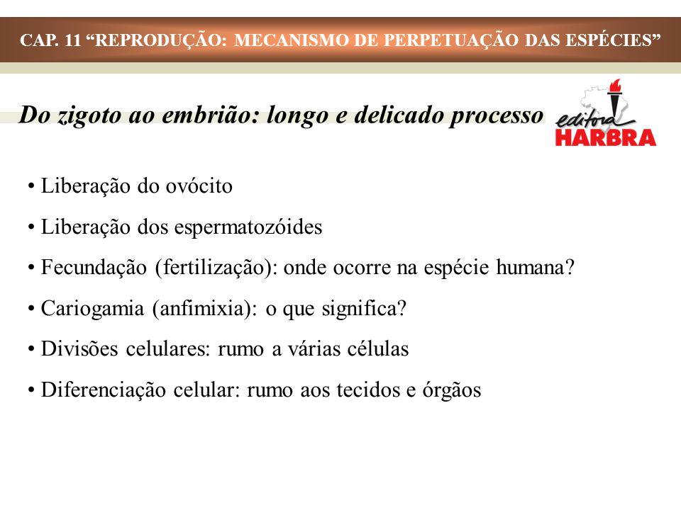 Liberação do ovócito Liberação dos espermatozóides Fecundação (fertilização): onde ocorre na espécie humana? Cariogamia (anfimixia): o que significa?